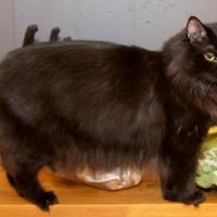 cat's weight