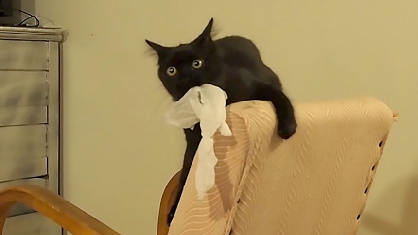 best toy for cats paper