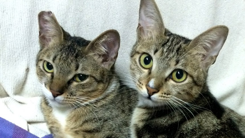 rescue report two kittens