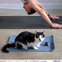 cat yoga mat